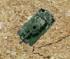 SL Tank Patrol